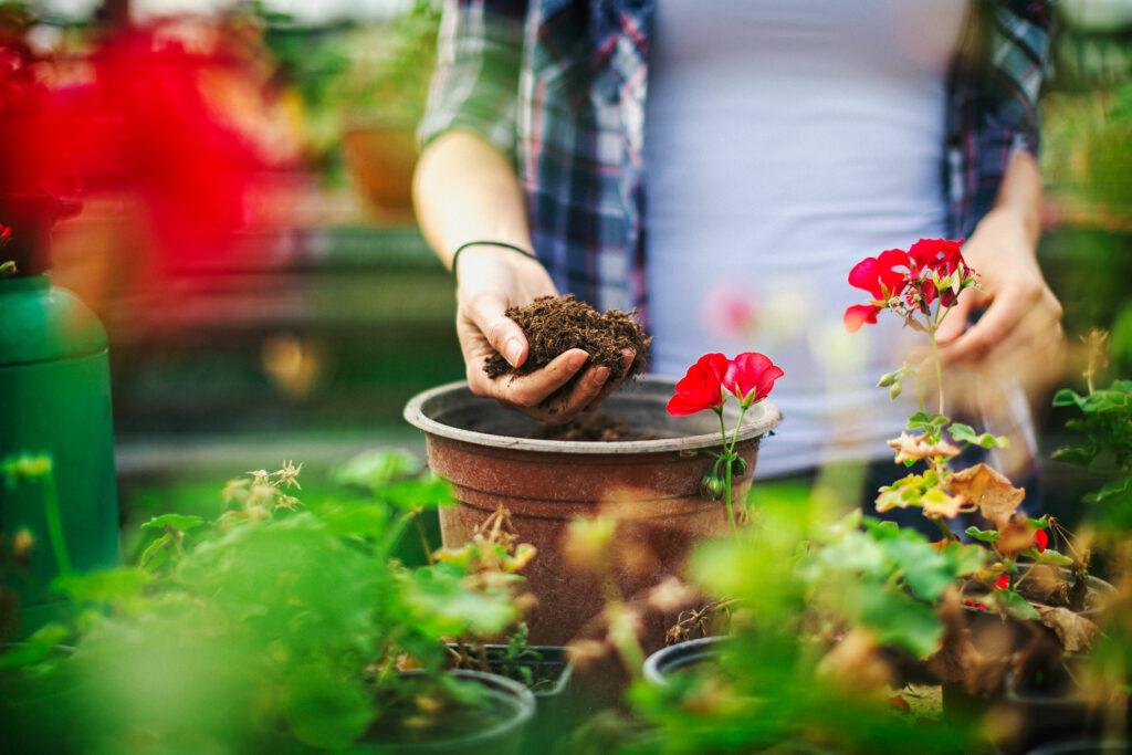 Bilden visar en kvinna som planterar en växt i en kruka.